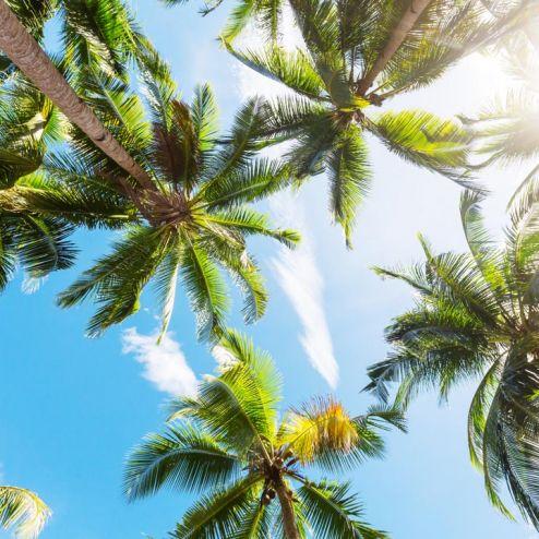 обои на потолок Фотообои верхушки пальм