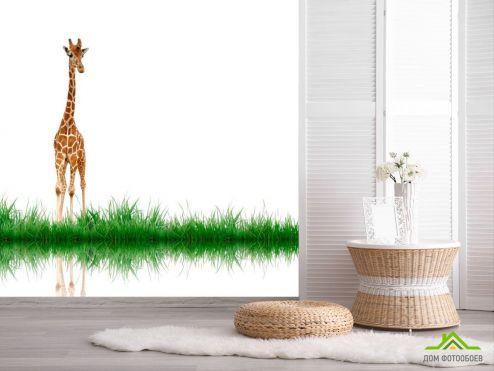 обои Жирафы Фотообои Жираф у воды