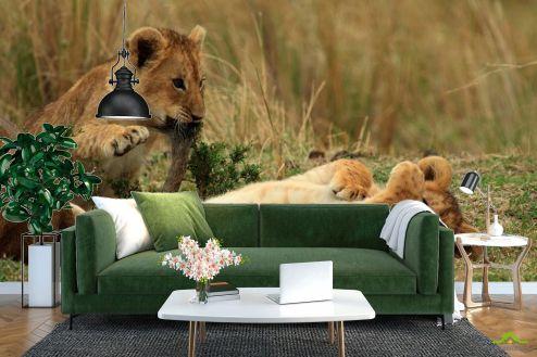 Львы Фотообои Игры львят