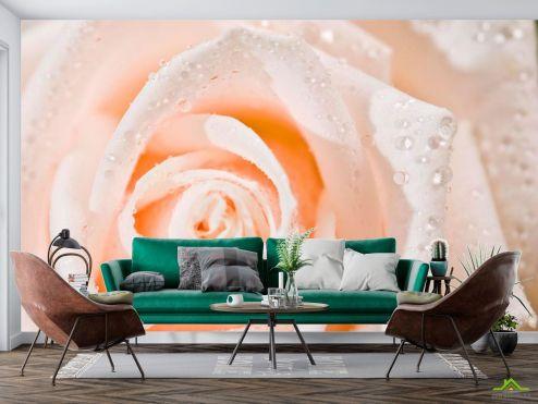 Цветы Фотообои Роза  купить